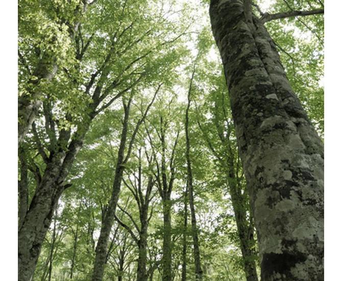大森林の樹木